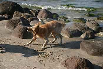 Ferienwohnung Binz mit Hund
